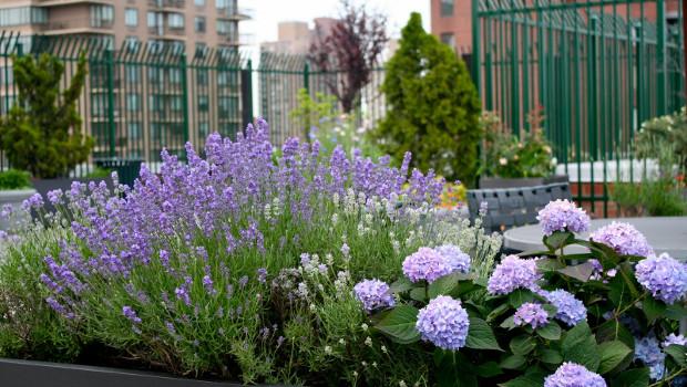 Растения, подходящи за терасата