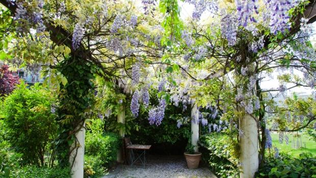 Прекрасни увивни растения за дома и градината