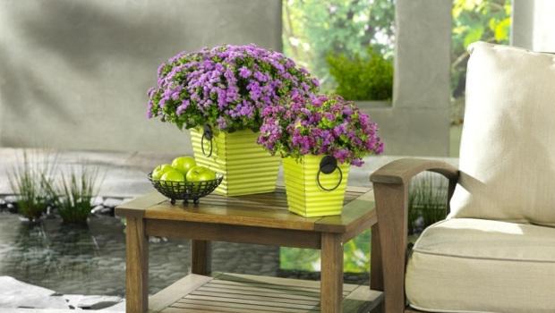 Кои са най - полезните стайни растения