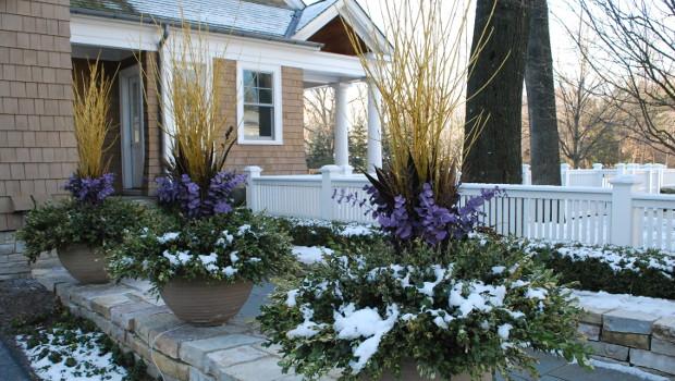 Зимоустойчиви растения за балкона и градината