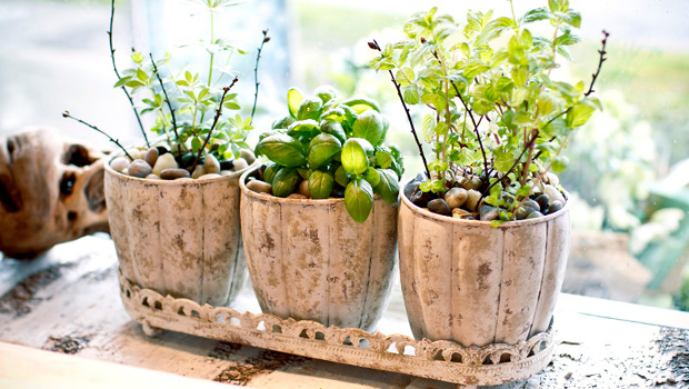 Стайни растения, които не изискват много грижи