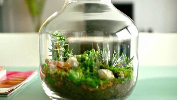 Мини градина в бутилка