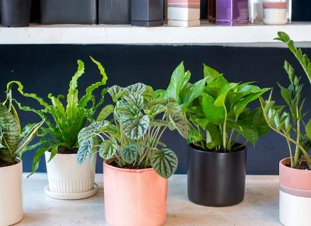 Растения за тъмните ъгли