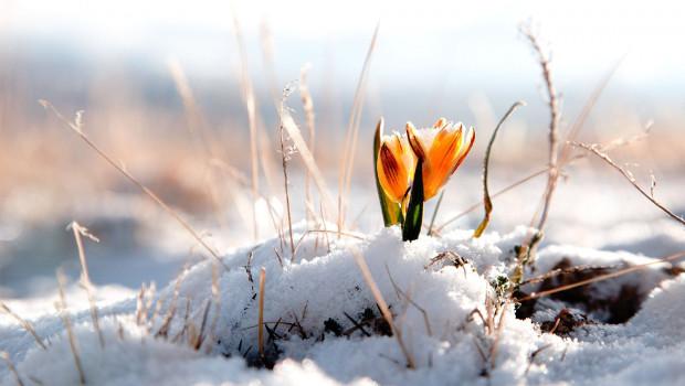 Красиви зимни цветни композиции