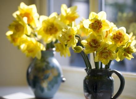 Нарцисът не обича компания във вазата