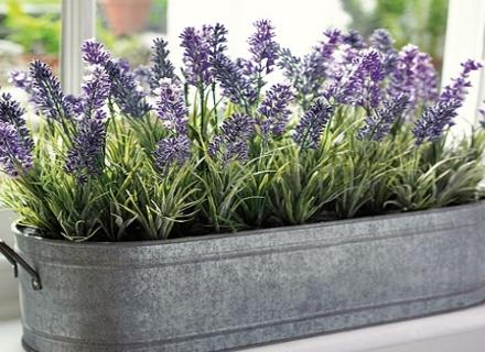 6 стайни растения, които ще подобрят здравето ви
