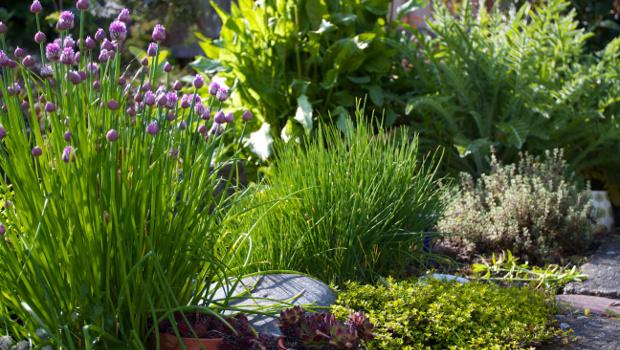 Декоративни треви в дома и в двора