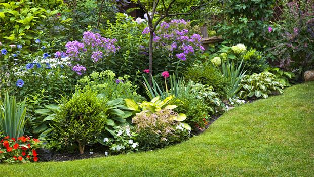 Храсти, които красят лятната градина