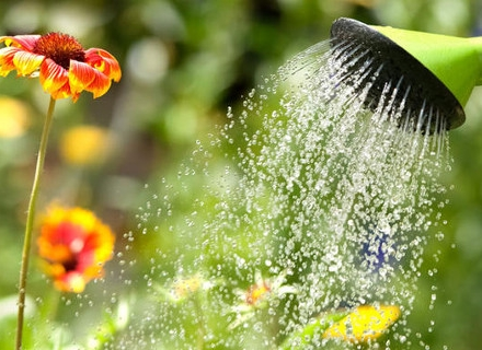 Как да поливаме цветята правилно