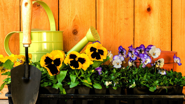 Как да подхранваме цветята