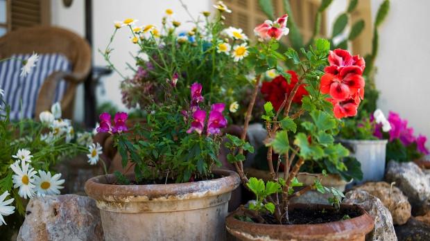 Болести и вредители по стайните растения - симптоми и решения