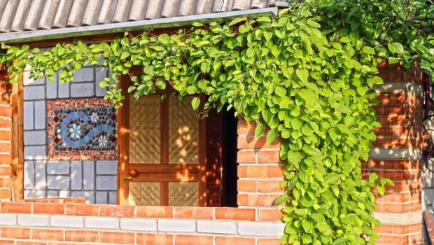 Вертикално озеленяване или жива зелена стена