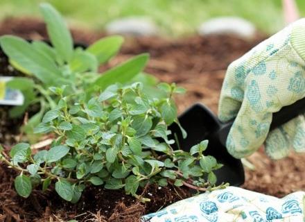 Кои растения не трябва да комбинираме в градината