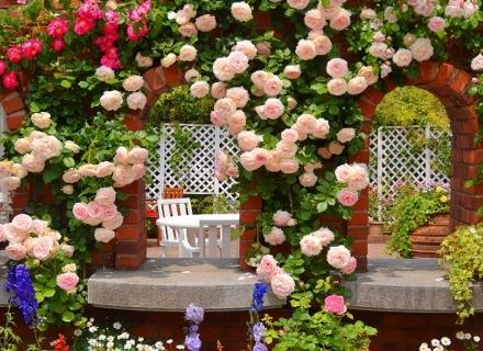 Невероятна градина с катерливи рози