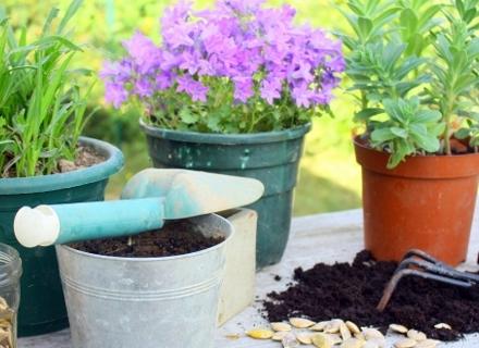 5 малко известни и лесни за отглеждане растения