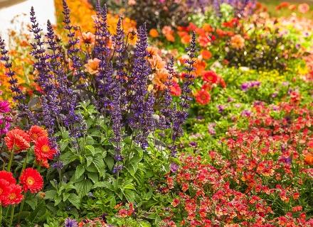 Издръжливи растения за летните горещини