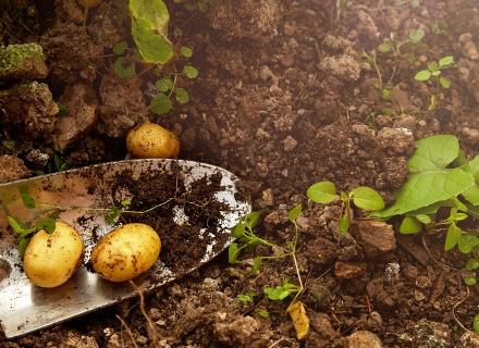 Как да си направим компост