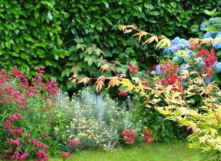 Цъфтящи храсти, с които да озеленим градината