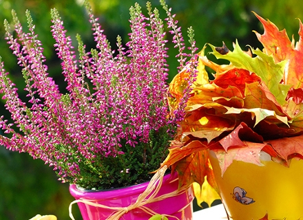 Есенна премяна за градината