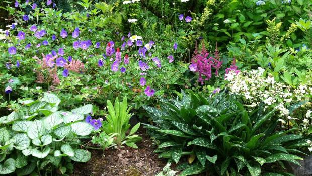 С кои растения да озеленим сенчестите места