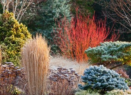 Как да защитим дървесните растения през зимата