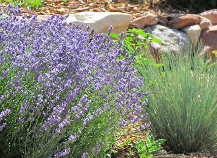 Градина във френски стил - характерни особености