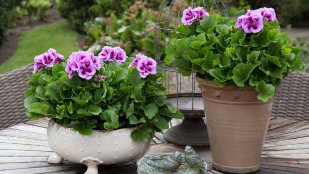 Зазимяване на цветята - основни правила