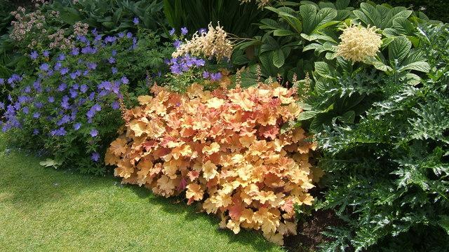 Растения, които намаляват ниските температури в почвата през зимата