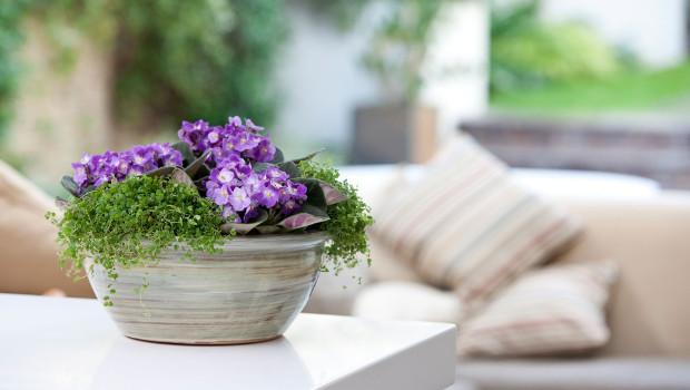Цветя, които харесват северни стаи