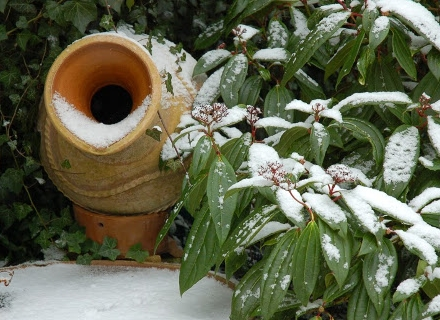 Свежа зимна градина с вечнозелени растения