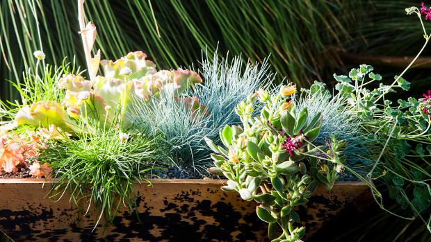 Стайни растения, подходящи за малки пространства
