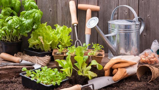 От колко светлина и топлина се нуждаят зеленчуковите растения