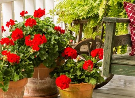 Кои цветя да отглеждаме на западен балкон