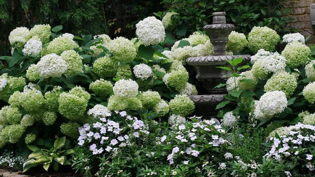 Растения, подходящи за северна стена