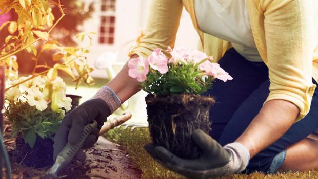 Кои цветя да засадим през април