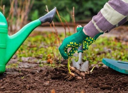 Кои растения си партнират добре в градината
