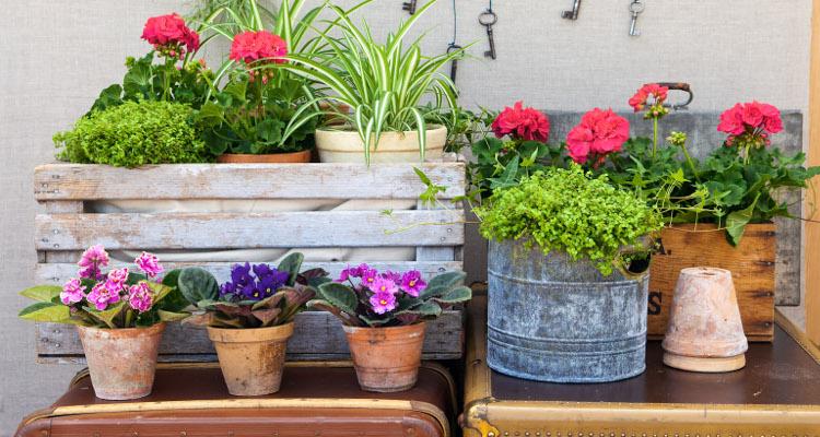 Съвети при резитба на стайни растения