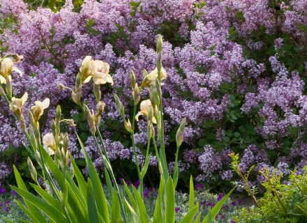 Създаване на пастелна леха в градината