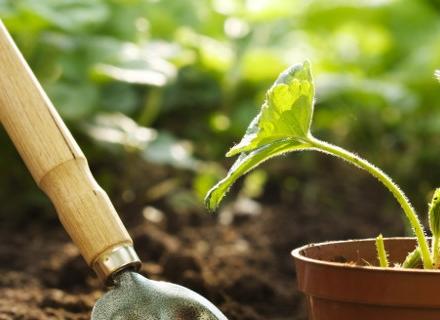 Какви инструменти са нужни на начинаещия градинар
