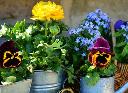 Задачи в градината в началото на лятото