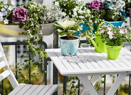 Балконски цветя, издържащи на суша и горещина
