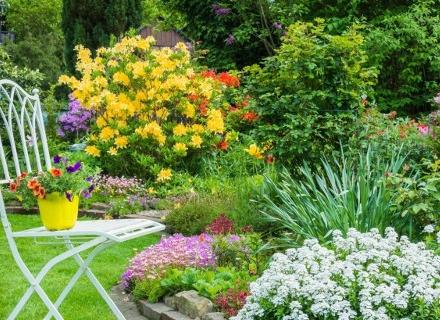 Растения за лятната градина