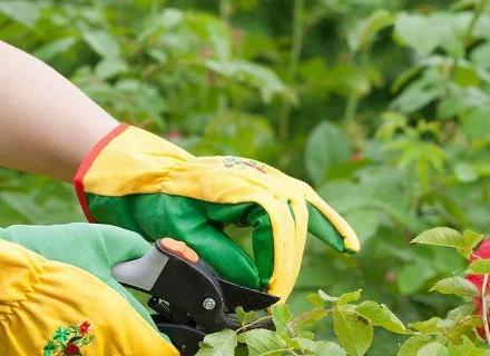 Как да подпомогнем цъфтежа на декоративните растения