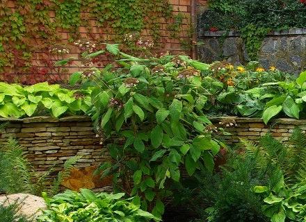 Градински растения, които издържат на всякакви условия