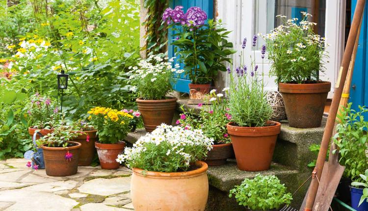 Събиране на семената на градинските цветя - кога и как