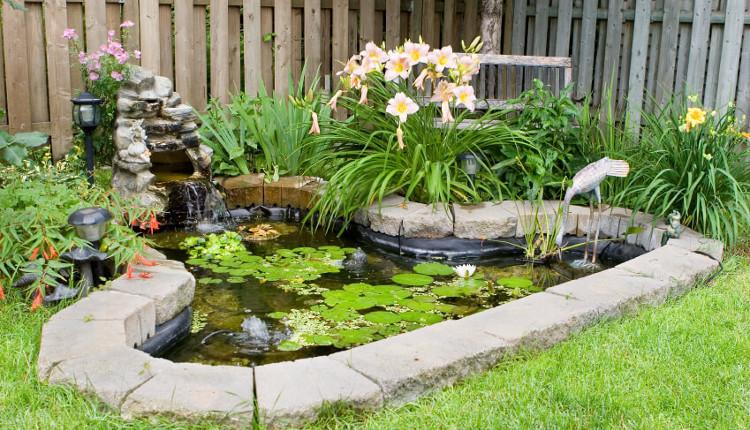 Растения за градинското езеро