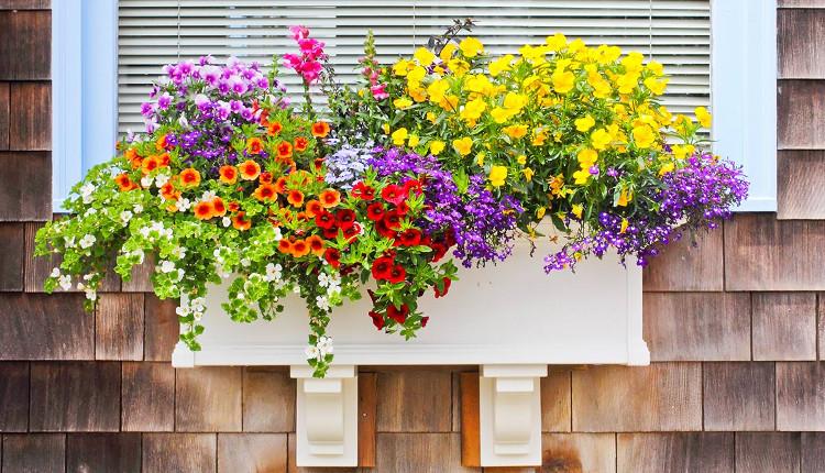 Цветя за южно изложение