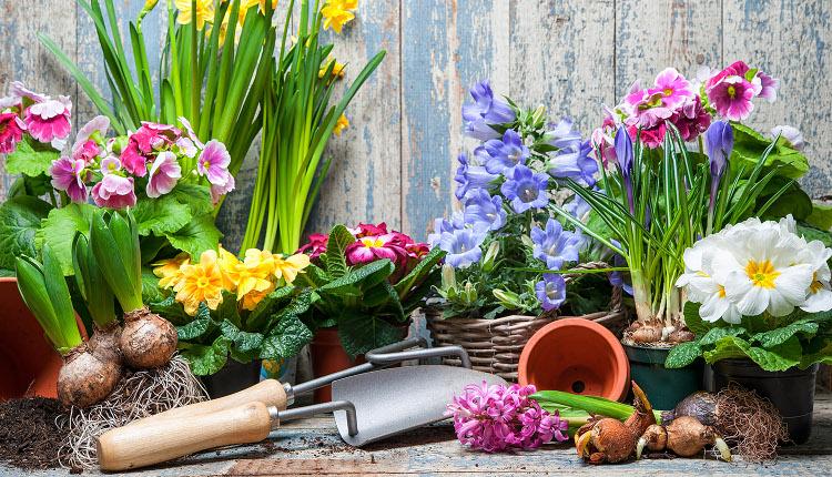 Планиране на пролетните цветя в градината