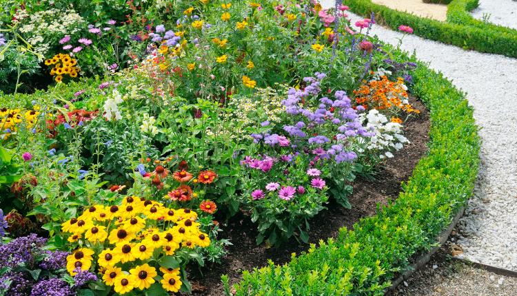 Цветя, които цъфтят през август