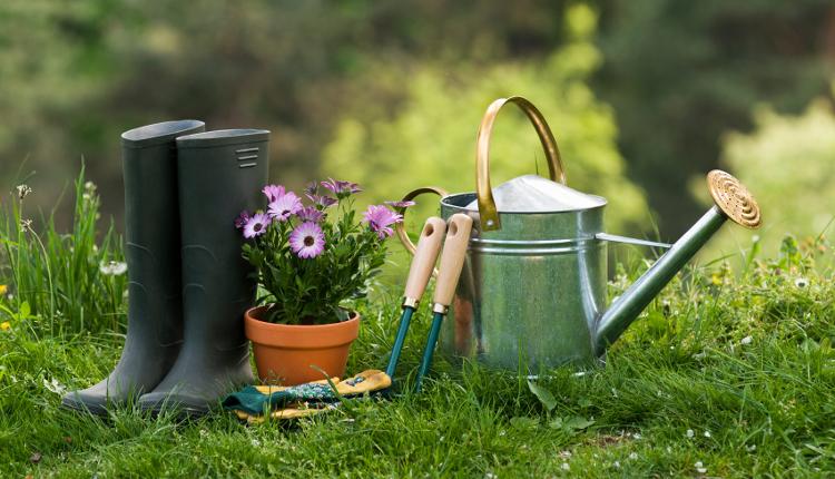 Растения - алтернативи на тревните смески